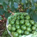 booth-avocado